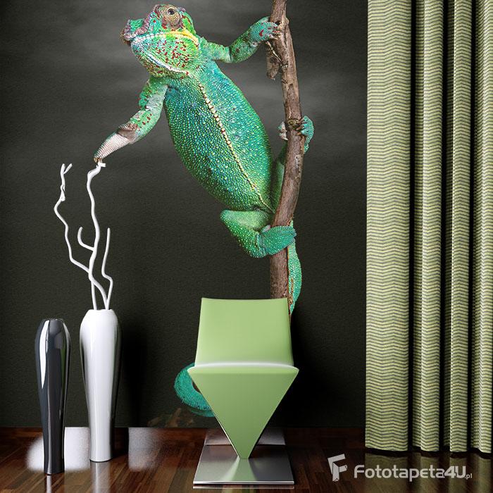 Fototapeta lateksowa laminowana kameleon na czarnym tle