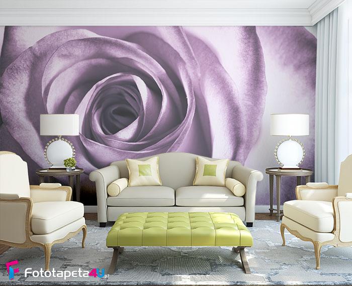 Fototapeta w salonie Purpurowa Róża