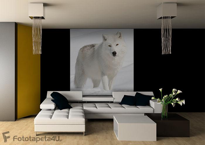 Fototapeta w salonie  Biały wilk na śniegu