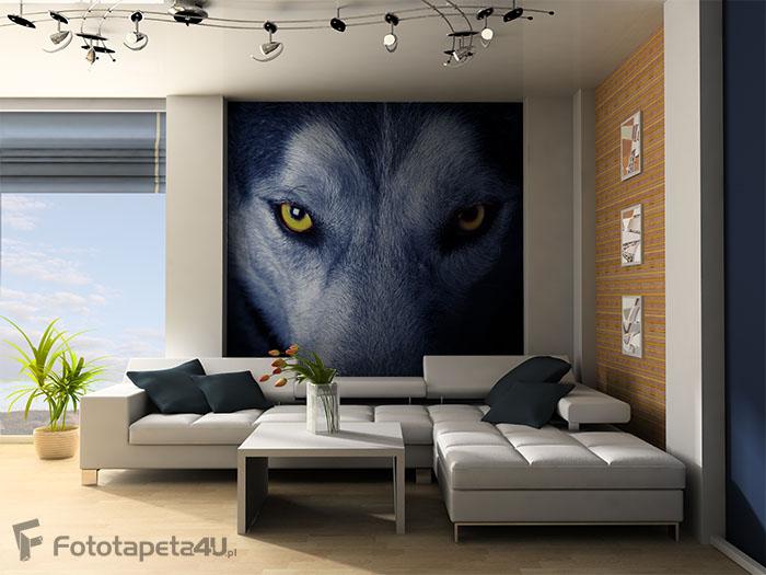 Fototapeta Piękne oczy wilka
