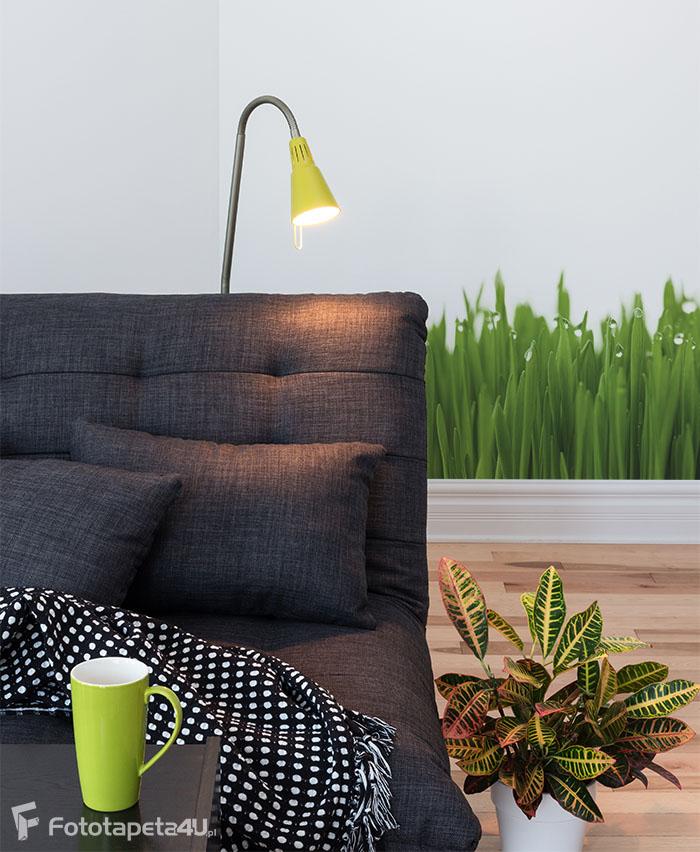 Fototapeta Fresh green wheat grass with drops dew