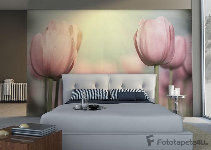 Fototapeta Blooming tulips
